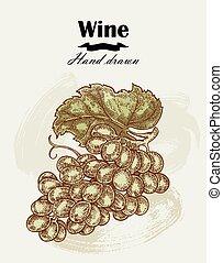 skicc, vintage., kéz, vektor, szőlő, húzott, bor