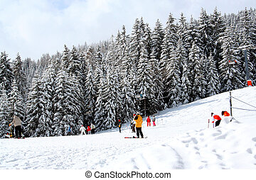 Skiers and alpine forest