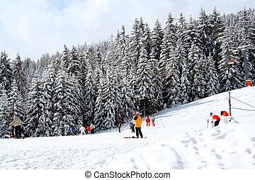 skiers, wald, alpin