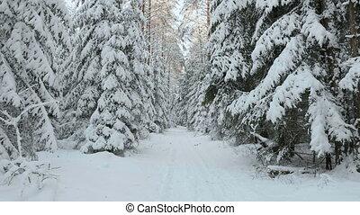 skieur, forêt, hiver