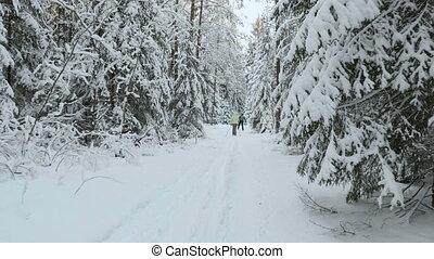 skieurs, forêt, hiver