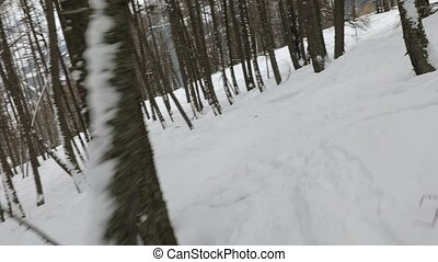 Skiing in the forest - Sking between trees first person view