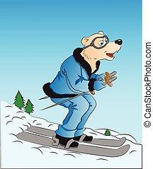 skiing., vettore, cane