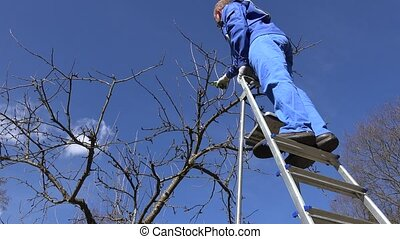 skilled gardener guy pruning apple tree twigs with scissors standing on ladder