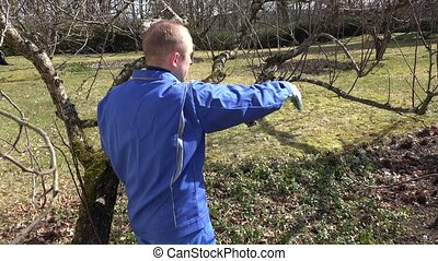 Skilled man pruning dwarf fruit tree twigs branches on blue sky. Hand shot