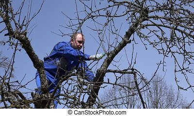 Skilled man pruning fruit tree twigs standing on high tree branches on blue sky