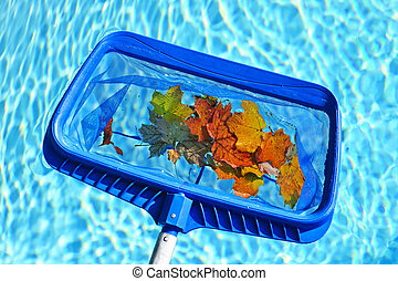 Skimming leaves from pool - Cleaning swimming pool of fall...