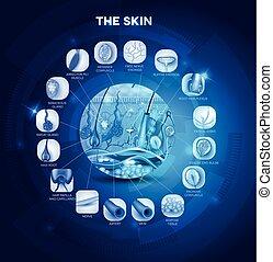 Skin anatomy structure in the round shape