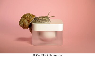 Skin care cosmetics with snail mucus. One snail climbing...