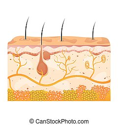 skin cells - illustration of skin cells on white background
