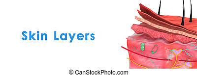 Skin layers - Skin is the soft outer covering of...