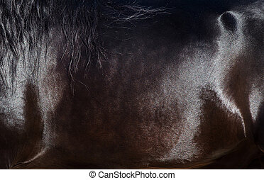 Skin of black horse closeup