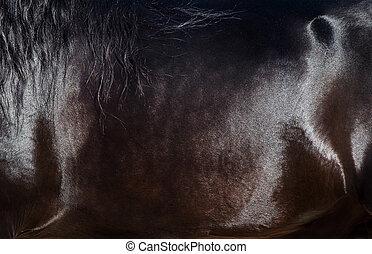 Skin of black horse closeup