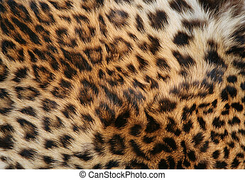 Skin of the leopard - Full screen high resolution shot of a ...