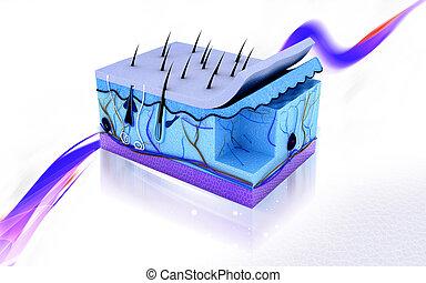 Skin  - Digital illustration of Skin in colour background