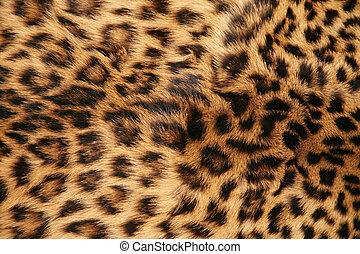 skinn, av, den, leopard