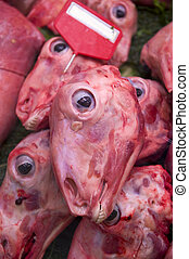 skinned sheeps head - heads of dead sheep skinned for sale
