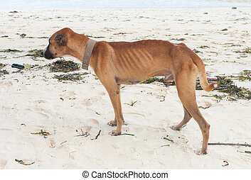 skinny stray dog on a beach in bohol