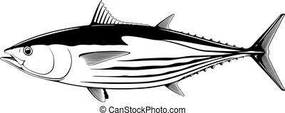 skipjack, 白い魚, マグロ, 黒