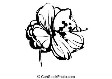 skiss, blomma, ute, knopp, blomstrande