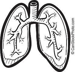 skiss, lunga, mänsklig