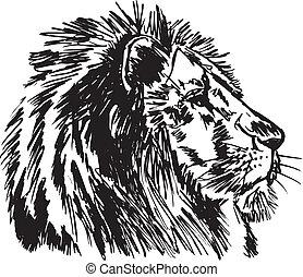 skiss, stor, illustration, lion., vektor, afrikansk hane