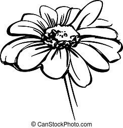 skiss, vild blomma, likna, a, tusensköna