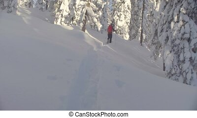Skitour in Siberia. A man skiing in a snowy forest. - Dolly...