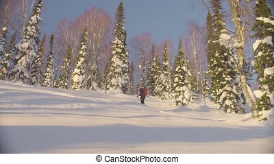 Skitour in Siberia. A man skiing in a snowy forest -...