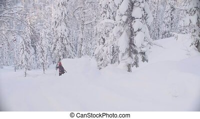Skitour in Siberia. A man skiing in a snowy forest. -...