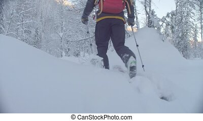 Skitour in Siberia. Man's legs skiing in a snowy forest. -...