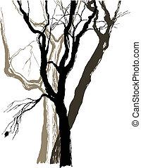 skitse, grafik, gamle, affattelseen, træer
