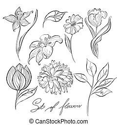 skitse, i, blomster