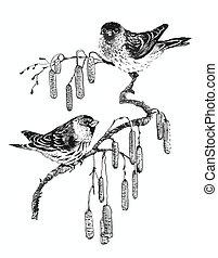 skitse, kvist, fugle, illustration
