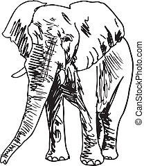 skitse, vektor, elephant., illustration