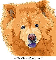 skizze, farbe, rasse, hund, chow-chow, vektor
