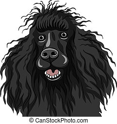 skizze, farbe, rasse, hund, franzoesischer pudel, vektor, schwarz, lächeln