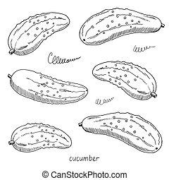 skizze, freigestellt, abbildung, hand, cucumbers., vektor, schwarzer hintergrund, gezeichnet, weißes