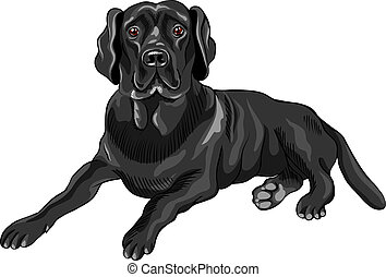 skizze, labrador, rasse, hund, vektor, schwarz, ...