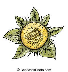 skizze, sonnenblume, design, dein