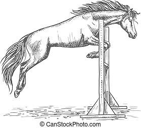 skizze, sperre, aus, pferd springen, porträt, weißes