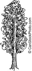 skizze, vektor, abbildung, baum., schwarz, weißes