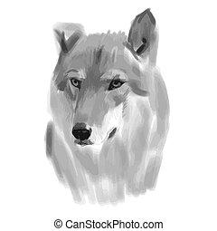 skizze, vektor, wolf, gesicht