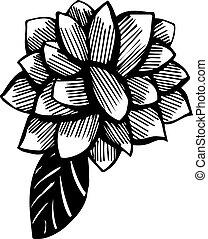 skizze, von, a, vegetatives , verzierung