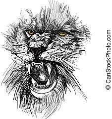 skizze, von, löwe, kopf
