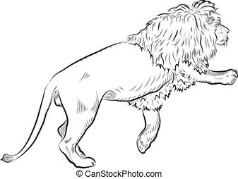 skizze, von, lion.