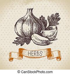 skizze, weinlese, hand, kraeuter, knoblauch, hintergrund, gezeichnet, spices., kueche