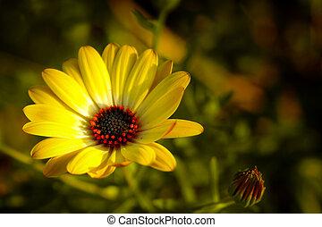 skoczcie kwiat