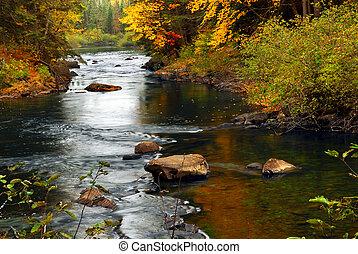skog, flod, in, den, falla