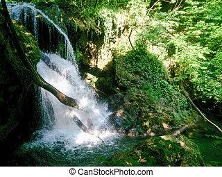 skog, flod, in, mountains, beskaffenhet landskap, med, träd, och, river.